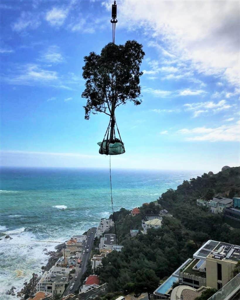 Habitat-Mature_Tree-Nursery_Cape-Town-Tree_Relocation