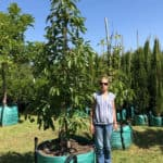 Habitat-Mature-Trees-For-Sale-South-Africa-Avo-Tree-500L